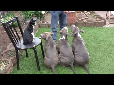 Feeding Cat and Dogs