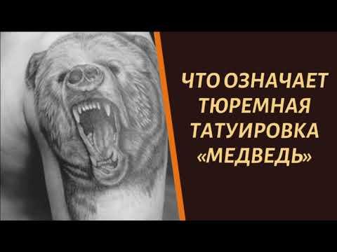 Что означает тюремная тату медведь и почему ее иногда накалывают воры?