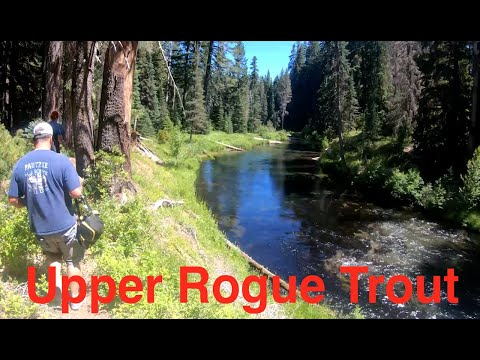 Upper Rogue River Trout Fishing