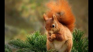 Смешные животные-белки.  Funny squirrel - Приколы белочки