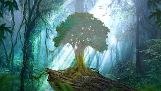 Relaxing Celtic Music for Meditation and Relaxation, Peaceful Music Forest Oak by Tim Janis