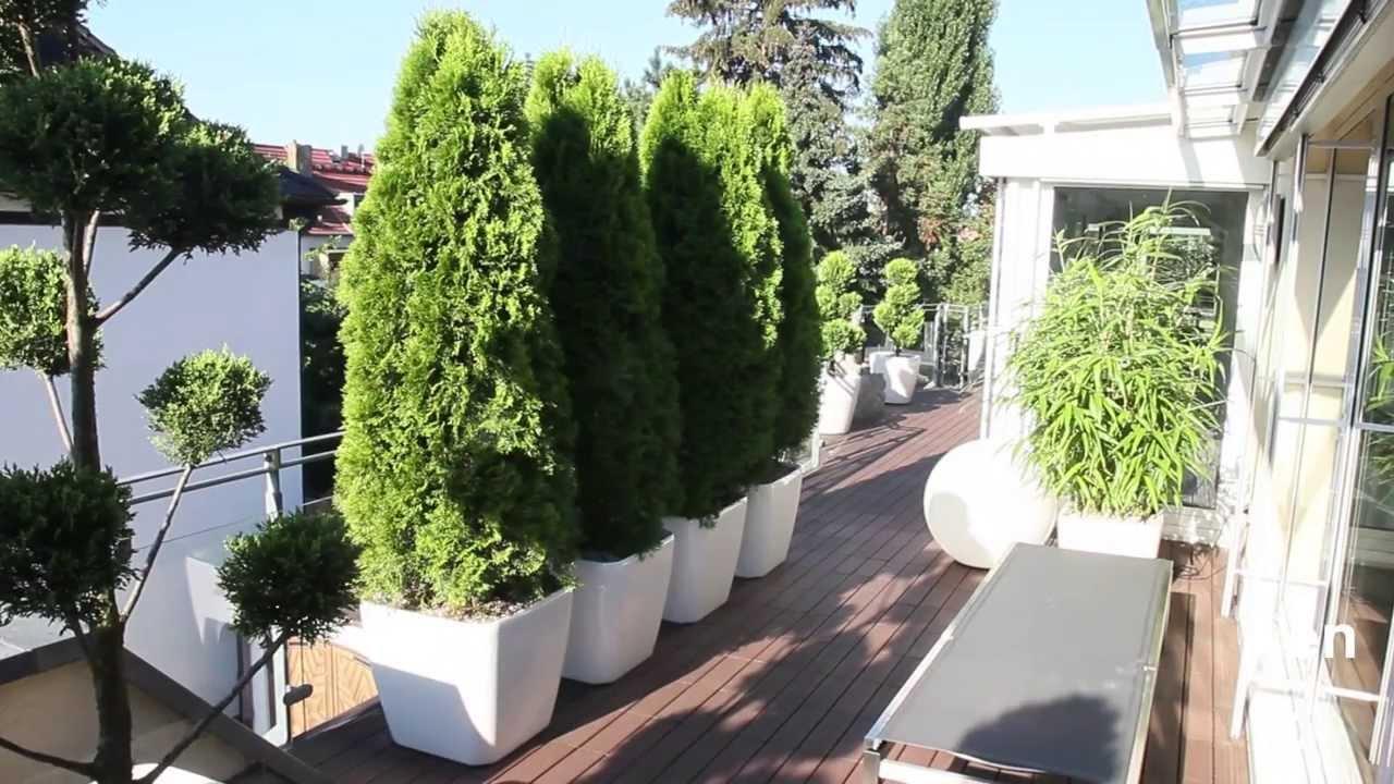 raumbegr nung und terrassenbegr nung pflanzenhaus sch ner