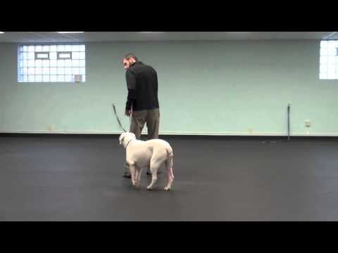 Follow me, Yield To Me - Tyler Muto's Dogmanship