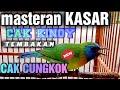 Masteran Kasar Cucak Kinoy Tembakan Rapat  Mp3 - Mp4 Download