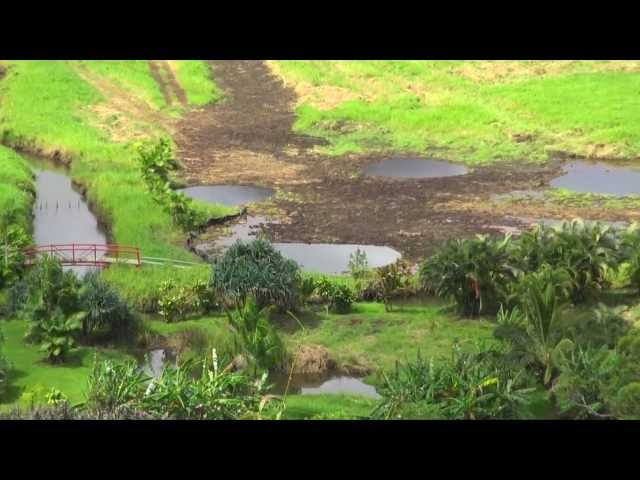 Hanalei Wetlands (mother nature on the run)