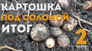 Картошка под соломой ИТОГ! Сезон 2018