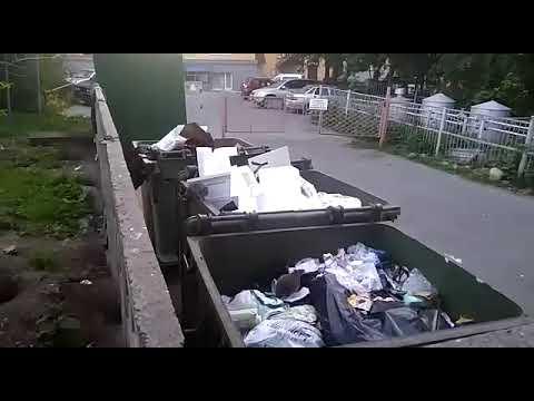 Крысы атакуют помойки в центре Петрозаводска