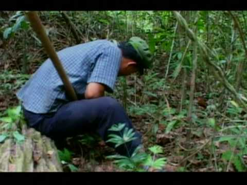 Former Khmer Rouge Child Soldier Has Spent the Last Two Decades Cleaning Cambodia of Mines, Alone and without Protection