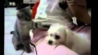 самые веселые кошки