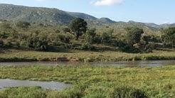 Kruger National Park Live!