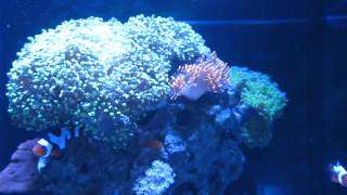 zoanthids not opening solved