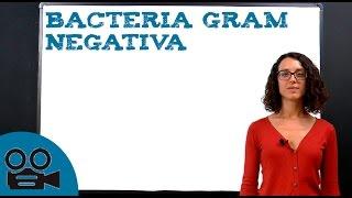 Bacteria Gram Negativa