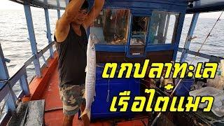 ตกปลาทะเล เรือไต๋แมวสัตหีบ Fishing Boat by Captain CAT