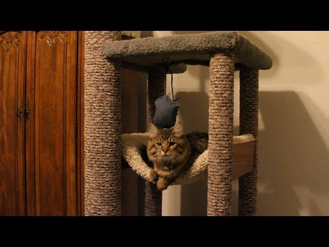 Thumbnail for Cat Video How to DIY heavy Duty Cat Tree - Tower - Climber for a Maine Coon cat