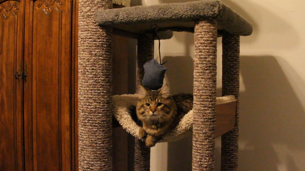 How To Diy Heavy Duty Cat Tree Tower Climber For A