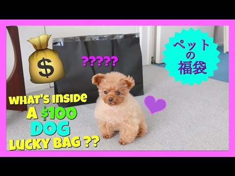 What's in a ¥10,000 Japanese Lucky Bag for Dogs? - YouTube