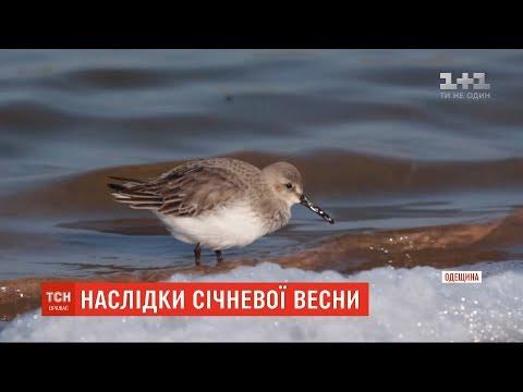 ТСН: На Одещині через аномальне тепло птахи почали гніздитися, а риба готується до нересту