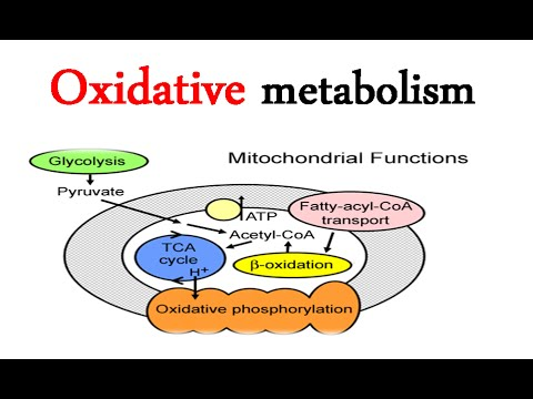 Overview of oxidative fuel metabolism