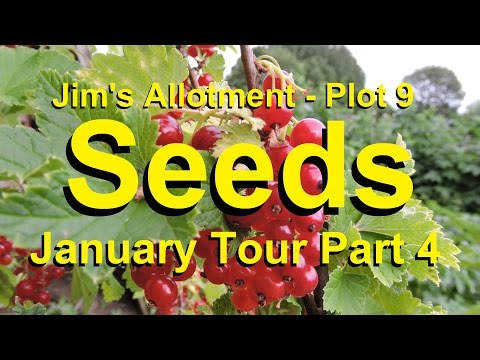 Jim's Allotment - Plot 9  - January Tour Part 4 - Seeds, Seeds & More Seeds
