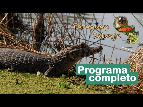 PARAGUAY SALVAJE: Los reptiles del Bajo Chaco