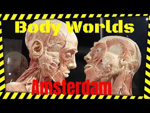 Body Worlds Amsterdam: Real Human Bodies exposition!