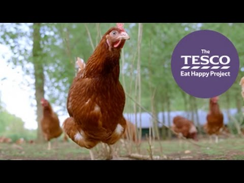 How do eggs get from farm to fork? Watch our Online Field Tr