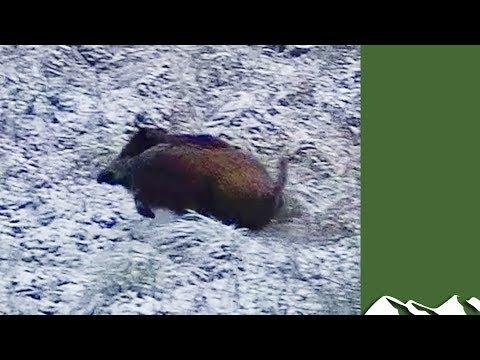 Wild Boar Driven Hunt