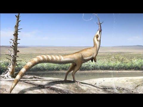 "Sinosauropteryx - a ""bandit-masked"" feathered dinosaur"