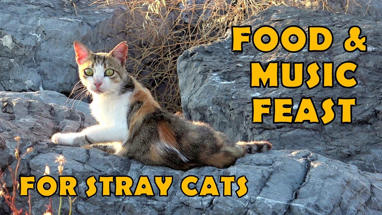 Food and music feast for stray cats. With street performers.