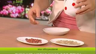 Как сделать кормушку для птиц  Час у дачи  Gubernia TV