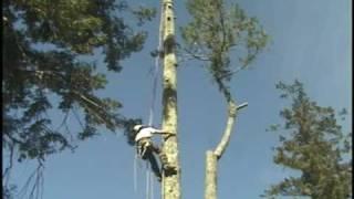 Grcs Arborist Tree Lowering Device From Baileysonline.com