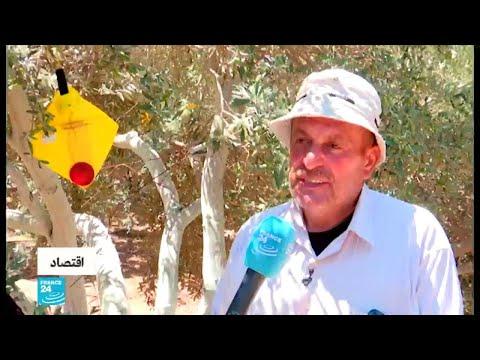 غزة.. الصليب الأحمر ينفذ مشاريع لدعم المزارعين المتضررين من الحصار الإسرائيلي  - 17:55-2019 / 7 / 11