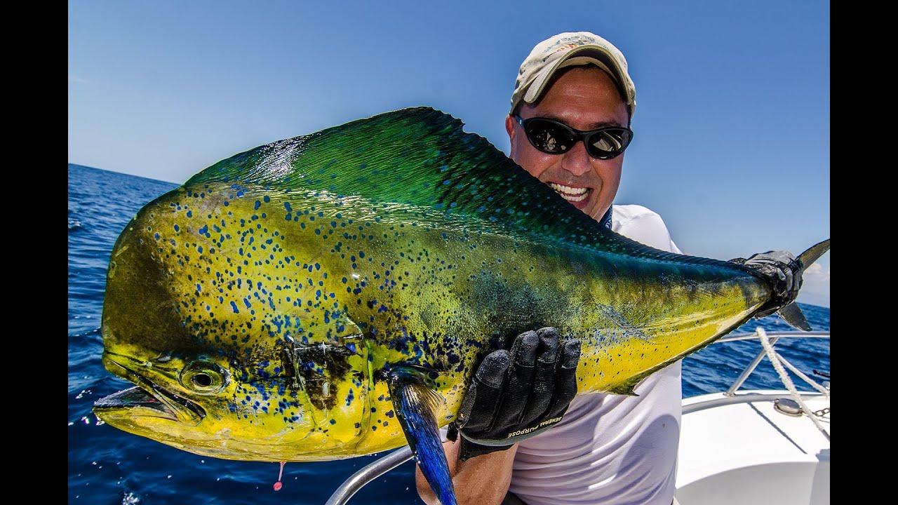 Pesca de dorado sailfish and skipjack fishing in san for Fishing in mexico