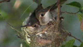 Life In The Hummingbird Nest