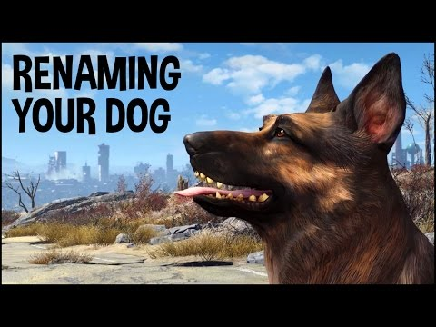 How To Get Dogmeat His Real Name 🐕 Fallout 4 Tips & Tricks