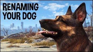 How to Get Dogmeat His Name in Fallout 4