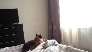 Мой кот почемута смотрит на стену