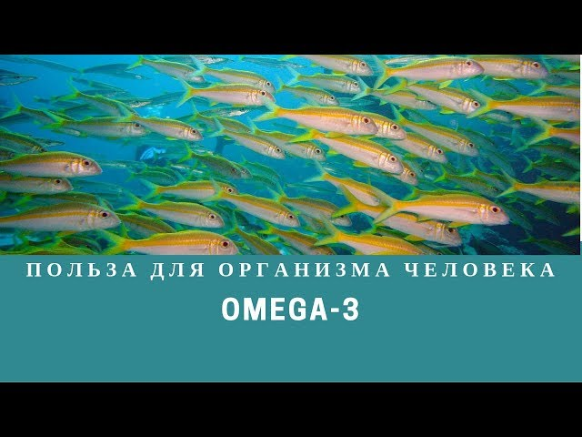 Польза Омега-3 для организма человека