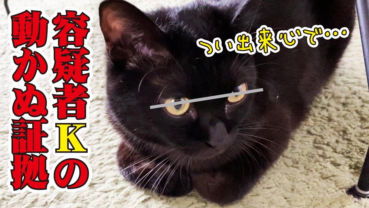 【決定的瞬間】おもちゃを勝手に出してくる猫の犯行の一部始終の撮影に成功!