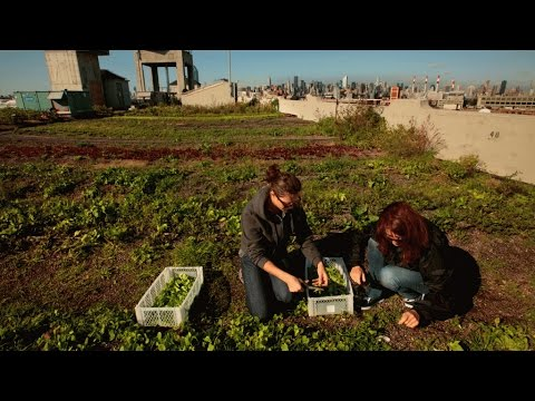 Agriculture Is Thriving on New York City Rooftops | Fortune