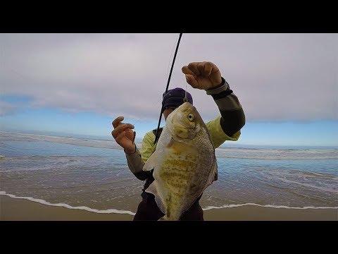 Oregon Coast Surf Fishing  - surf fishing tips to catch more fish