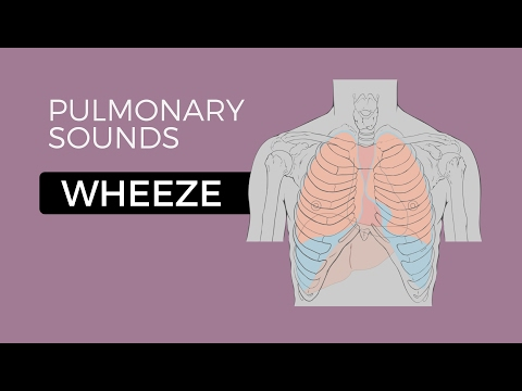 03 _ Lung Sounds - Wheeze