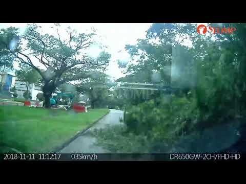 Stomper Captures Exact Moment Of Tree Falling On Car Along Yio Chu Kang Road