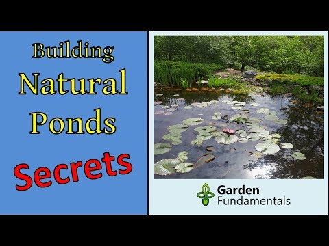 Secrets To Building Natural Ponds The Right Way (New Method)