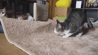 💕Best cute cat & cute kittens funny cat videos💕#14
