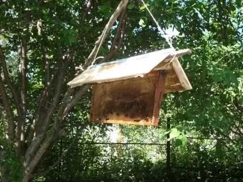 привой для пчел