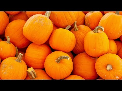 5 Incredible Health Benefits Of Pumpkin