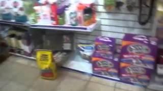 Hermosos perritos jugando felices en +KOTA Pabellón Polanco