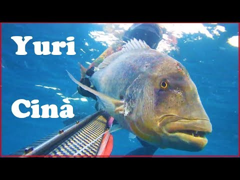 BEST OF SPEARFISHING SERIES - Juri Cinà - AMBERJACKS AND DENTEX IN ITALY