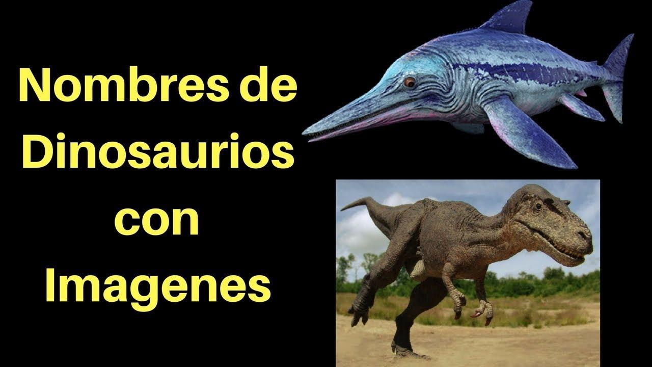 Nombres De Dinosaurios Con Imagenes Dinosaurios Para Ninos En Espanol Youtube Canción los dinosaurios por blippi español | canciones infantiles dinosaurios para niños. nombres de dinosaurios con imagenes